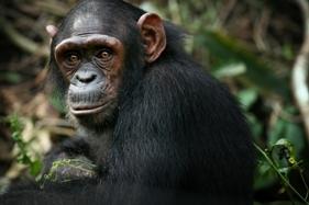 Akiba at Sanaga-Yong Rescue Center in Cameroon.