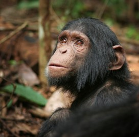 Arvid at the Sanaga-Yong Rescue Center in Cameroon.