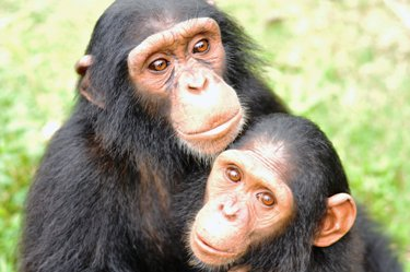 Baati with Kanza at the Sanaga-Yong Rescue Center in Cameroon.