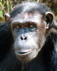 Dorothy at the Sanaga-Yong Rescue Center in Cameroon.