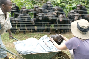 Chimps seeing Dorothy's body a final time, with Dr. Speede.