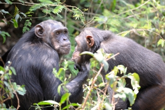 Issah and Johnny at Sanaga-Yong Rescue Center in Cameroon.