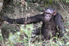 Niete at the Sanaga-Yong Rescue Center in Cameroon.