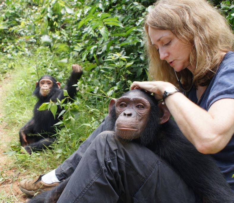 Sheri examining Simossa at the Sanaga-Yong Rescue Center in Cameroon.